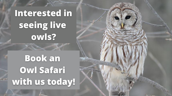 Click Here to Explore the Owl Safari Series at JCC