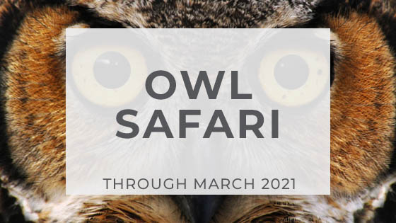 Owl Safari - Click here to learn more.